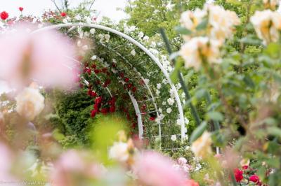 開成山公園のバラの花園