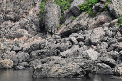 鵜泊海岸の縞状ホルンフェルスと今金の異なった地層~火山活動の歴史を読む~(北海道)