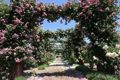 信州なかの一本木バラ公園、コロナ禍のリベンジ