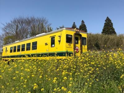 【過去日記】菜の花まみれのいすみ鉄道を乗り倒してきた・前編