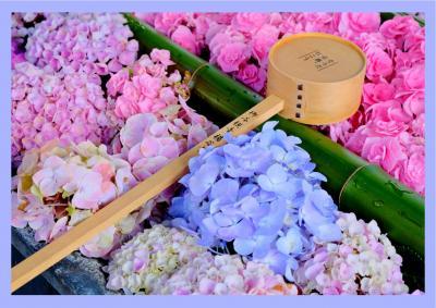 梅雨の季節の花*あじさい*を見に『柳谷観音楊谷寺』へ♪