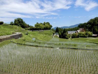 安近短でプチ旅気分☆ 大阪で唯一の村 ~千早赤阪村 下赤坂棚田~ 6月の風景