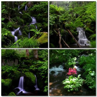 ◆初夏の裏磐梯・苔に潤う幽玄の沢めぐり
