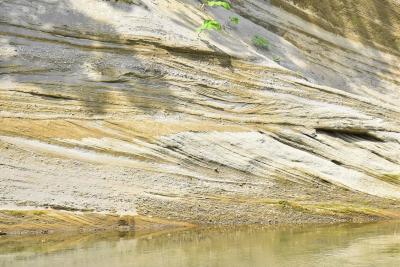 瀬棚層の斜交層理を紹介~杉の葉のような美しい模様~(北海道今金)