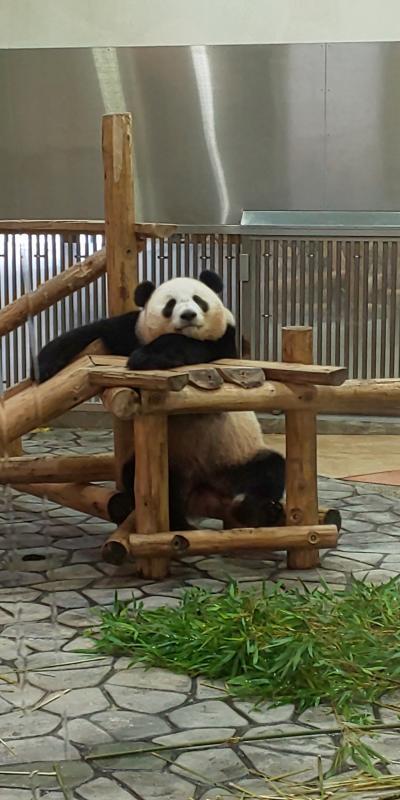 自粛生活解除記念のプチtravel! さぁパンダに逢いに行こう!