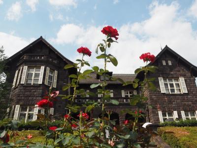 旧古河庭園のバラの花と飛鳥の小径のアジサイ!!