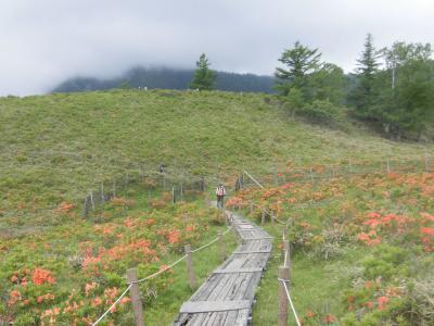 2020夏 山梨:梅雨の晴れ間にレンゲツツジの甘利山と千頭星山。富士山は残念、、、、