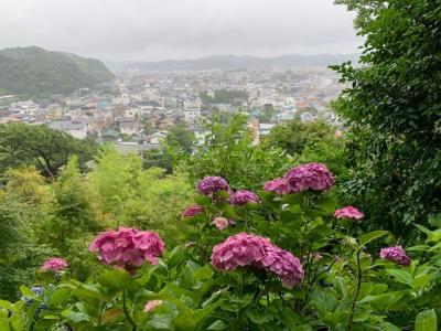 鎌倉の長谷寺 紫陽花の路へ