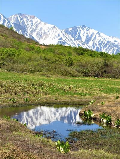 初夏の北アルプス山麓めぐり(1)八方尾根