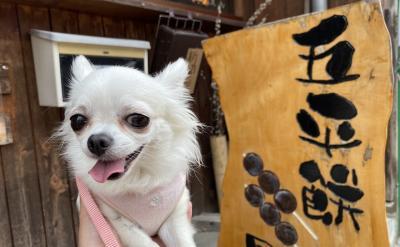 ペットと行く岐阜岩村の三大五平餅日帰りドライブ旅