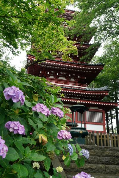 本土寺観光 2020年6月