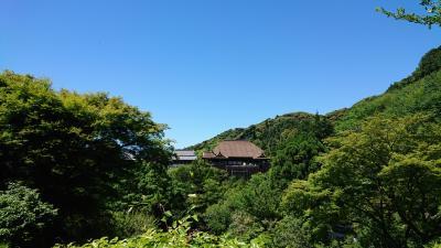 平成の大改修の終了は想像と違っていたけど、あの人に会えてうれしかった清水寺