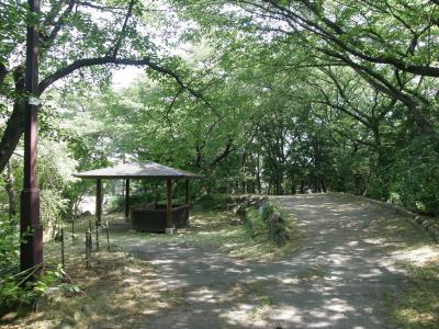 ラベンダー山は丸坊主・それでも静寂の菖蒲支所エリアのラベンダーを楽しむ