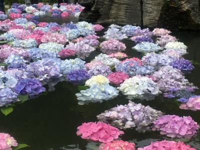 久安寺の紫陽花で夢心地♪