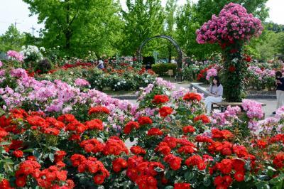 庄堺公園のバラ園