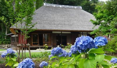 馬場花木園散歩 6月の花(38種)