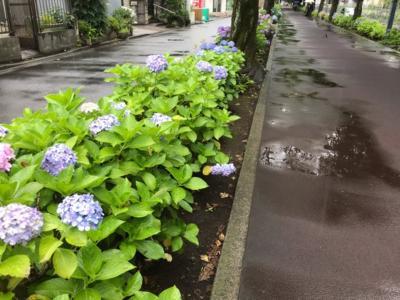 埼玉・武蔵浦和の紫陽花2020~花と緑の散歩道と別所沼公園~