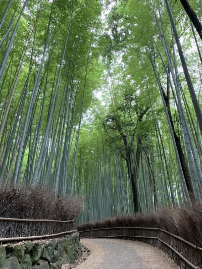いいタイミングの京都、嵐山散策。前編