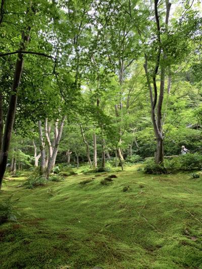 いいタイミングの京都嵐山散策。後編