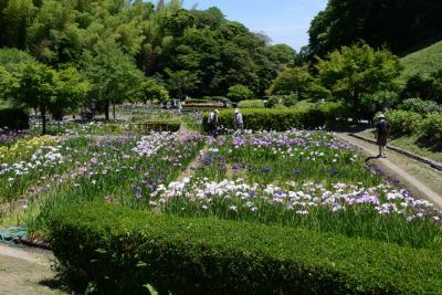 亀山公園菖蒲園