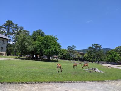 奈良公園をウロウロ