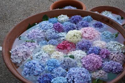 20200623-2 大阪 長居植物園の紫陽花を観て、自然史博物館で骨を観て
