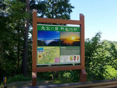 コアジサイ(小紫陽花)を求めて  !  野迫川村