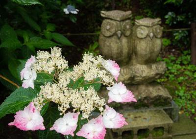 ふくろう神社の紫陽花