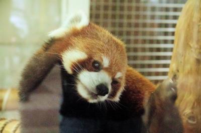 羽村市動物公園&東武動物公園&大崎公園子供動物園 新天地でのアル君&カリンちゃんに会いに、そして、長生きしてねミクおばあちゃん