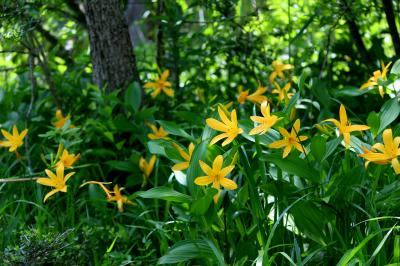 ◆花咲き水踊る初夏の羽鳥湖高原