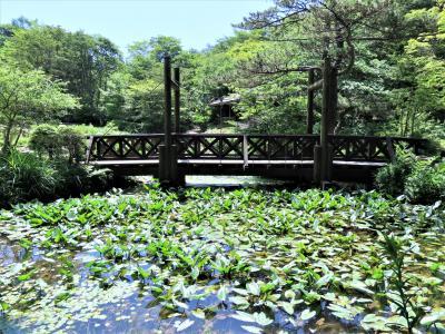 先週に続いて六甲山地へ、六甲高山植物園~六甲ガーデンテラスの花々を鑑賞します!