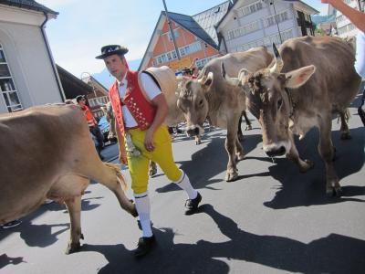 ①たくさん牛を見よう! Urnasch*Alpabzug*2019/9