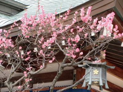 2019年2月 福岡 博多座で宝塚宙組公演観劇。天神様には梅が咲いていました。
