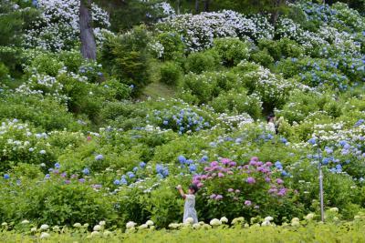 京都府北部に、ドライブする(その2・舞鶴自然文化園)