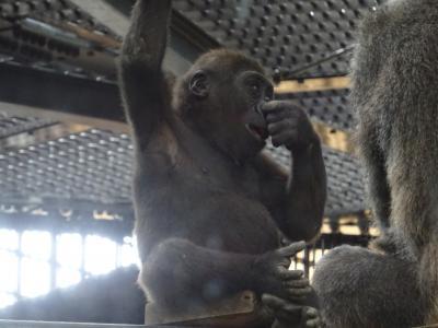 京の週末 移動自粛解除後の岡崎エリアパトロール☆京都市動物園