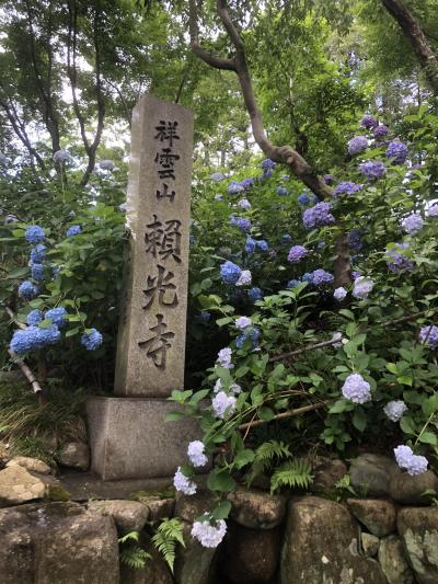川西市 頼光寺の紫陽花