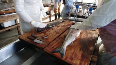 2019 福島 新潟 大作戦 ③ 村上で塩引き鮭体験