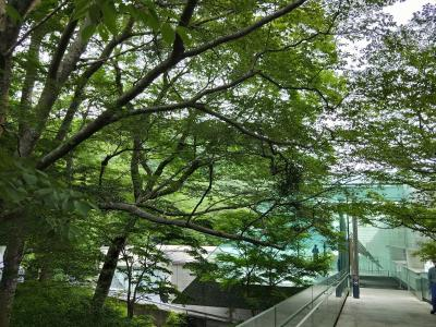 自粛明け最初の日帰りお出かけは、箱根のポーラ美術館と日帰り温泉天山へ