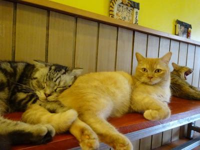 2019年 5月~8月 タイロングステイの日常 その21 (チェンマイの猫カフェ)