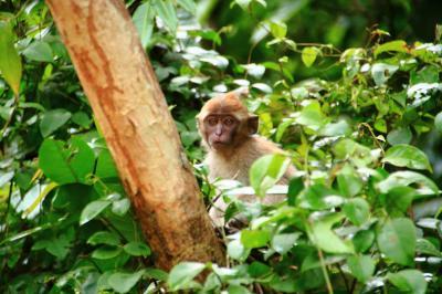 マレーシア活動制限令下でのボルネオ島・サンダカンへの旅 2.ジャングルへ突入