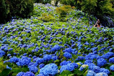 青の絨毯を求めて男鹿の北浦雲昌寺へ。一生に一度は見たい絶景(⌒∇⌒)・・・しかし男鹿は遠かった。