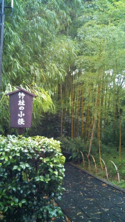 豪雨の伊豆修善寺~竹林の小径~①