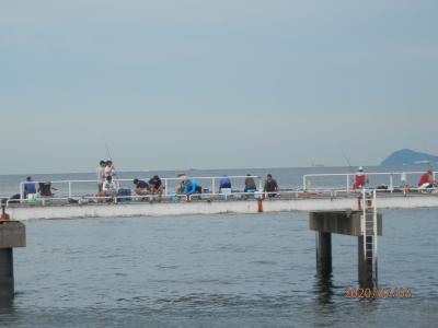 車中泊9と10と11と12豊浜26と27と28と29釣り桟橋 アジが来る
