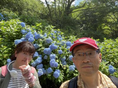 2020.6そうだアジサイ見に行こう、って苦行。生駒登山、暗峠・ぬかた園地・石切神社