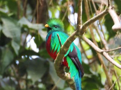 中米・コスタリカへ行って、世界で一番美しい鳥「ケツァール」を見てみよう