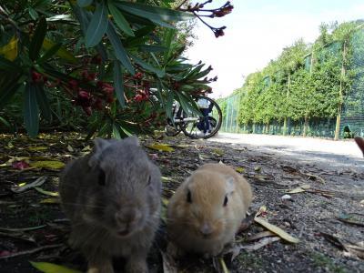 うさぎの楽園♪大久野島に行ってみた!