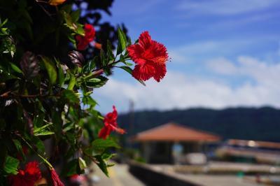 八重山諸島・周遊の旅 2(船浮集落とイダの浜)