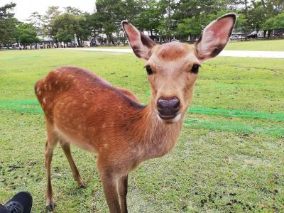 県またぎ解除 奈良ホテルに泊まるふたり旅 鹿せんべい、もってる?1日目