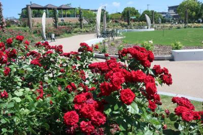 2020 茨木バラ公園 若園公園