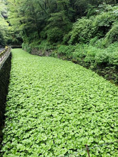 静岡県民限定クーポン利用して伊豆旅行へ行ってきました!